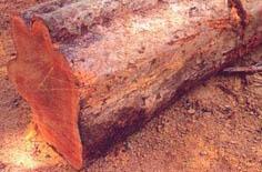 As-madeiras-mais-indicadas-para-construcao-de-telhado-goiabao